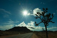 Joshua tree at the roadside, Joshua Tree National Park, California, USA Fine Art Print