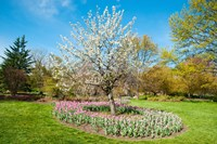 Tree in Sherwood Gardens, Baltimore, Maryland Fine Art Print
