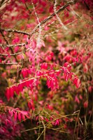 Close-up of a plant in a garden in autumn, Musee de l'Ecole de Nancy, Nancy, Meurthe-et-Moselle, Lorraine, France by Panoramic Images - various sizes