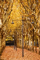 Esplanade des Quinconces park in autumn, Bordeaux, Gironde, Aquitaine, France by Panoramic Images - various sizes, FulcrumGallery.com brand
