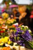 Bunch of flowers at a flower shop, Rue De Buci, Paris, Ile-de-France, France by Panoramic Images - various sizes, FulcrumGallery.com brand