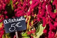 Price tag on Amaranth flowers at a flower shop, Rue De Buci, Paris, Ile-de-France, France by Panoramic Images - various sizes
