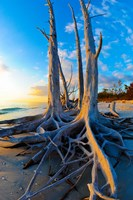 Lovers Key State Park, Lee County, Florida by Panoramic Images - various sizes, FulcrumGallery.com brand