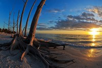 Dead Trees on the Beach at Sunset, Lovers Key State Park, Lee County, Florida Fine Art Print
