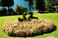 Topiary and flower bed in a garden, Villa Carlotta, Tremezzo, Como, Lombardy, Italy by Panoramic Images - various sizes - $54.99