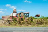 Sugar Cane being Harvested, Australia by Panoramic Images - various sizes