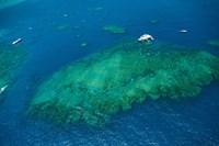 Aerial view of coral reef in the pacific ocean, Great Barrier Reef, Queensland, Australia Fine Art Print