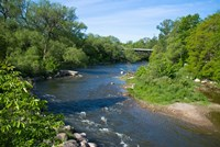 River passing through a forest, Beaver River, Ontario, Canada by Panoramic Images - various sizes, FulcrumGallery.com brand