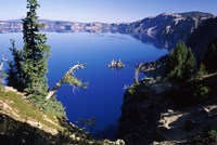 Red Elderberry (Sambucus racemosa) with Phantom Ship island in Crater Lake, Crater Lake National Park, Oregon, USA by Panoramic Images - various sizes