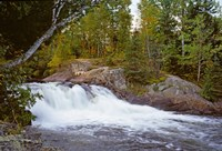 Waterfall in a forest, Oxtongue River, Algonquin Provincial Park, Ontario, Canada by Panoramic Images - various sizes, FulcrumGallery.com brand