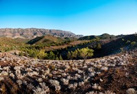 Typical outback landscape, Hawker, Flinders Ranges National Park, South Australia, Australia by Panoramic Images - various sizes