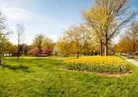 Flowers with trees at Sherwood Gardens, Baltimore, Maryland, USA Fine Art Print