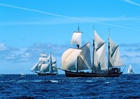 Tall ship regatta, France by Panoramic Images - various sizes