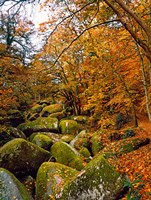 Huelgoat Forest in Autumn, Finistere, Brittany, France by Panoramic Images - various sizes, FulcrumGallery.com brand