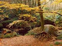Huelgoat Forest Covered in Autumn Leaves, Finistere, Brittany, France by Panoramic Images - various sizes, FulcrumGallery.com brand