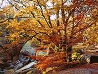 Autumn in Huelgoat Forest, Brittany, France by Panoramic Images - various sizes