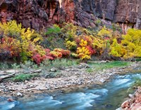 Virgin River and rock face at Big Bend, Zion National Park, Springdale, Utah, USA Fine Art Print