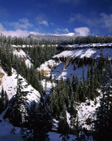 Snow covered trees in winter, Godfrey Glen, Crater Lake National Park, Oregon, USA by Panoramic Images - various sizes