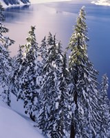 Snow Covered Trees at South Rim, Crater Lake National Park, Oregon Fine Art Print