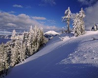 Snow covered trees in winter, Mt. Scott, Crater Lake National Park, Oregon, USA by Panoramic Images - various sizes