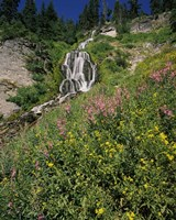 Fireweed at Vidae Falls, Crater Lake National Park, Oregon, USA by Panoramic Images - various sizes