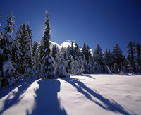 Sunrise through snow covered fir trees at South Rim, Crater Lake National Park, Oregon, USA by Panoramic Images - various sizes