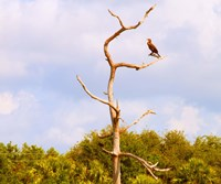 Low angle view of a Cormorant (Phalacrocorax carbo) on a tree, Boynton Beach, Florida, USA by Panoramic Images - various sizes