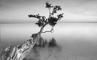 Water Tree XII by Moises Levy - various sizes