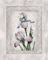 Floral IV by Tom Wood - various sizes