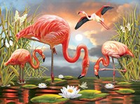 Flamingos Fine Art Print