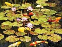 Koi Pond I by Rosiland Solomon - various sizes, FulcrumGallery.com brand