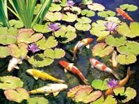 Koi Pond IV Fine Art Print