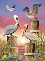 Pelicans-Vertical by Rosiland Solomon - various sizes