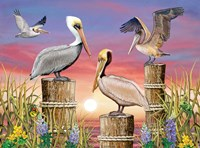 Pelicans by Rosiland Solomon - various sizes
