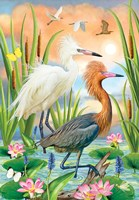 Reddish Heron Two Phases Fine Art Print