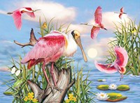 Roseate Spoonbill by Rosiland Solomon - various sizes