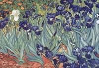 Irises, Saint-Remy, 1889 by Vincent Van Gogh, 1889 - various sizes