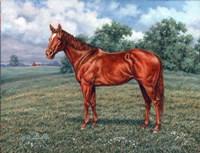 Summer Pasture Fine Art Print