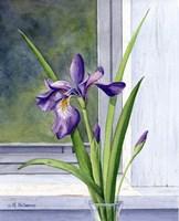"""16"""" x 20"""" Iris Pictures"""