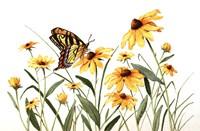 Butterfly & Black Eyed Susans Fine Art Print