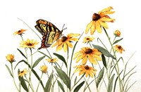 Butterfly & Black Eyed Susans Fine Art Print