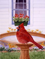 Cardinal And Geraniums Fine Art Print