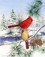 Cedar Farms Cardinals II Fine Art Print