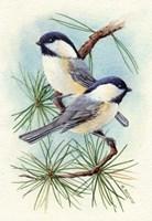 Chickadee Vignette Fine Art Print
