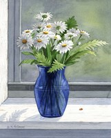 Daisies by Maureen Mccarthy - various sizes