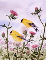 Goldfinch and Thistle Framed Print