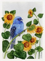 Indigo Bunting And Sunflower Fine Art Print