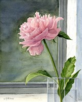 Pink Peony by Maureen Mccarthy - various sizes - $24.99