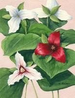 Three Trilliums by Maureen Mccarthy - various sizes
