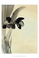 Orchid Blush Panels I Fine Art Print